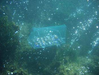 Transplantation des coraux