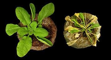 Le microorganisme végétal de longle du pouce de la photo