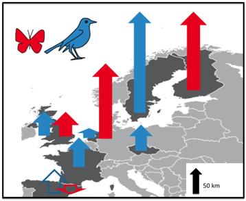 Cette carte issue de l\'étude montre la vitesse relative de déplacement des communautés d\'oiseaux et de papillons dans différents pays européens.