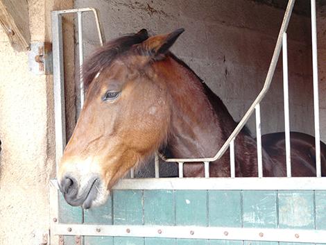 cheval stress chronique