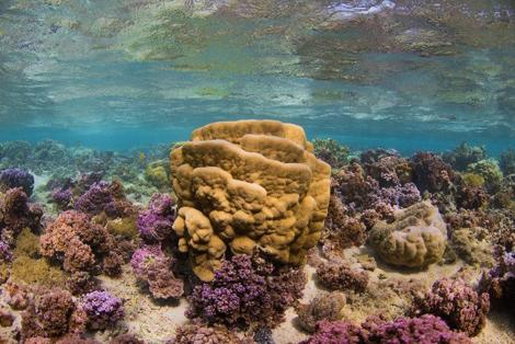 tara-corail1