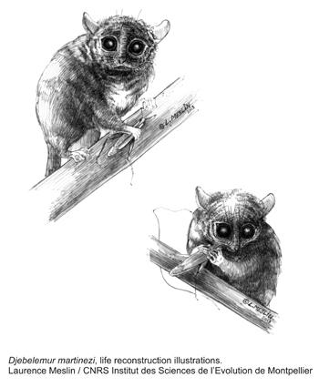 lemuriens dessins