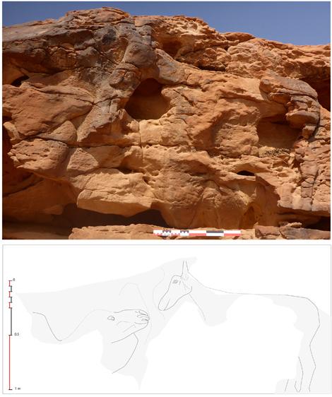 Relieve rupestre representando a un dromedario acostado levantando la cabeza hacia un équido, probablemente un asno o una mula. Foto: CNRS/MADAJ, G. Charloux.