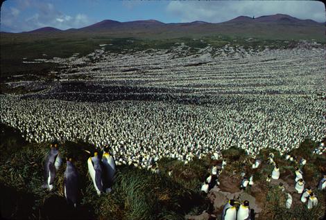 Image1-1982