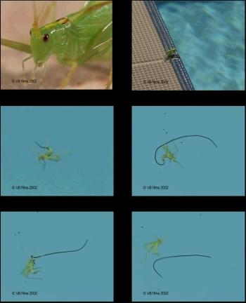 imagesgroupeesweb.jpg