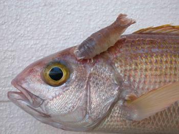 poissons récifs coralliens