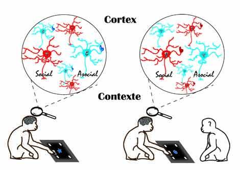 Schéma neurones sociaux