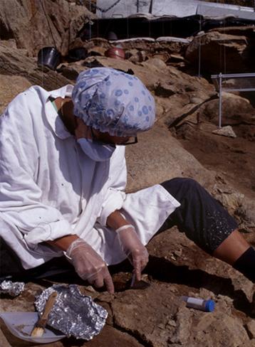 Photo ADN fossile