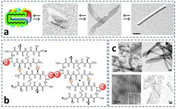 Los nanotubos de fotos