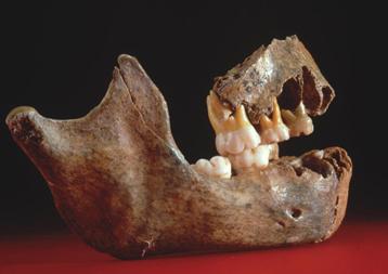 Néandertal mandibule
