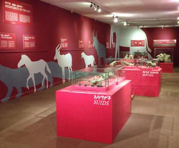 Salle biodiversité ancienne_Galerie paléo_Ethiopie