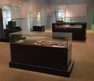 Salle hominidés anciens_Galerie paléo_Ethiopie