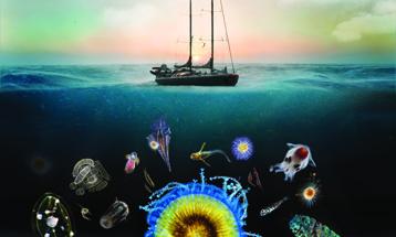 Tara Oceans_Plancton