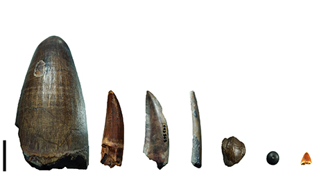 Gadoufaoua teeth