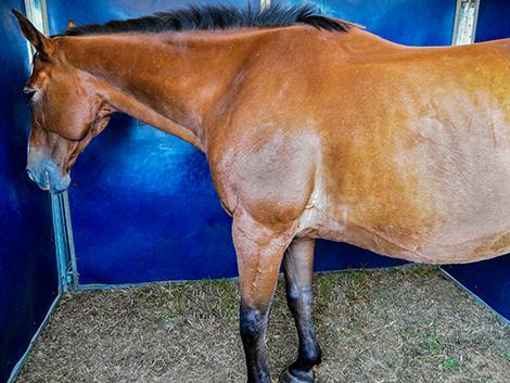 horse depression