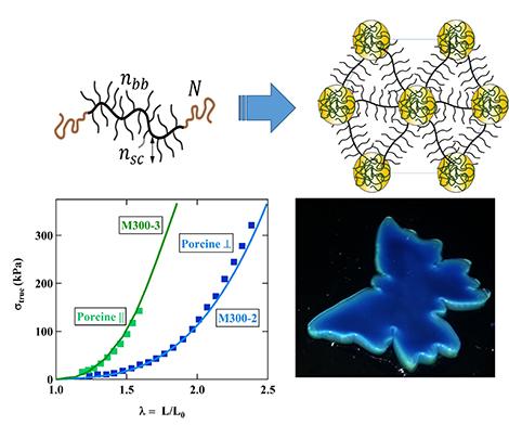 Chameleon-like polymer