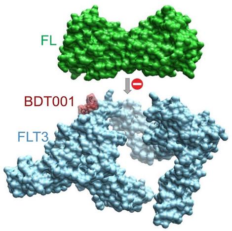 Image molecule