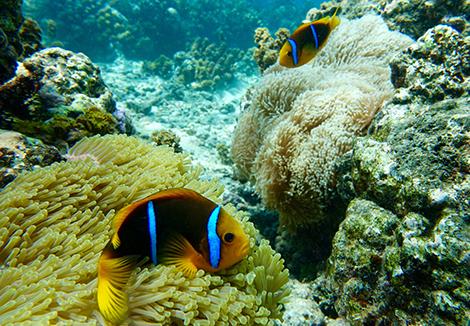 Moorea reef
