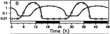 La evolución de la concentración de los productos de dos genes clave del reloj circadiano de la alga marina Ostreococcus Tauri como una función del tiempo