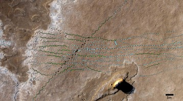 A close-up of the Mleisa 1 elephant trackways