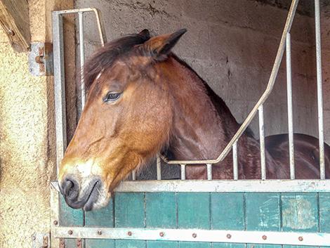 horse_ears back
