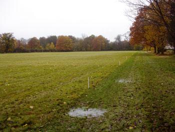 soil of park grass