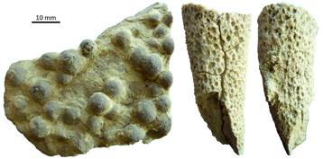 Las esponjas silíceas de diversos tipos, que datan del Triásico temprano y se encuentra en el centro de Utah.