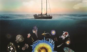 Plankton4