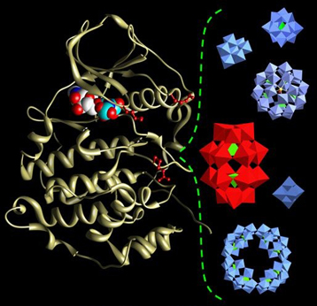 Structure of the protein kinase CK2 (left) and the structures of different polyoxometalate (POM) molecules (right).