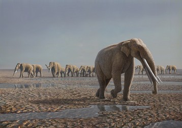 Reconstruction of the Mleisa 1 herd