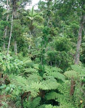 Photos des lieux Dossier_6_foret_tropicale
