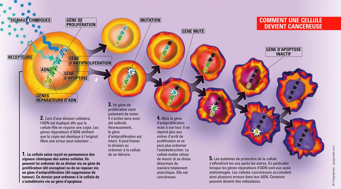 cancer initiation promotion progression pdf